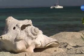 Revierbericht Kuba Folge 4 – Vimeo thumbnail